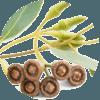 Blahovičník kulatoplodý