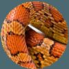 Hadí tuk