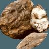 Pórnatka kokosová