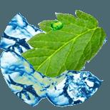 Rostlinné aminokyseliny