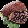 154_Kakao