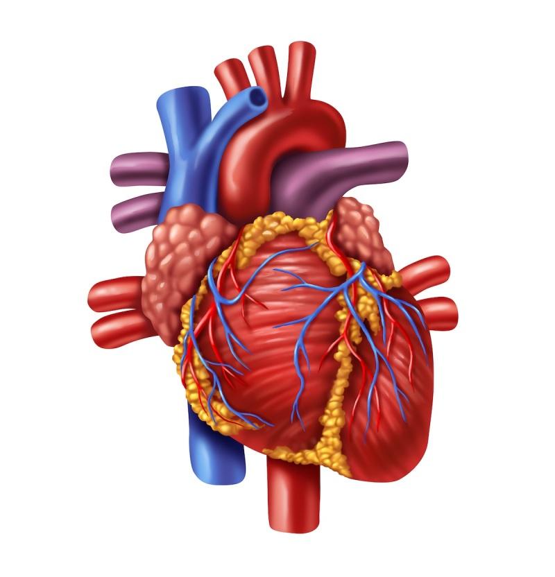 Srdce - TČM - Království TianDe