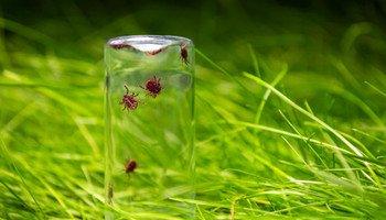 Jak se zbavit dotěrného hmyzu